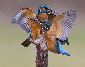 2019 Kingfisher Photography Workshops