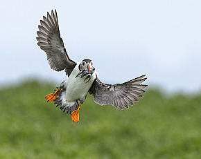 2020 Farne Islands Wildlife Spectacular
