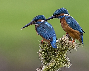 2020 Cuckoo And Kingfisher Photography Day