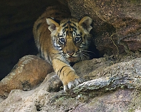 2021 Tigers Of India Photography Tour