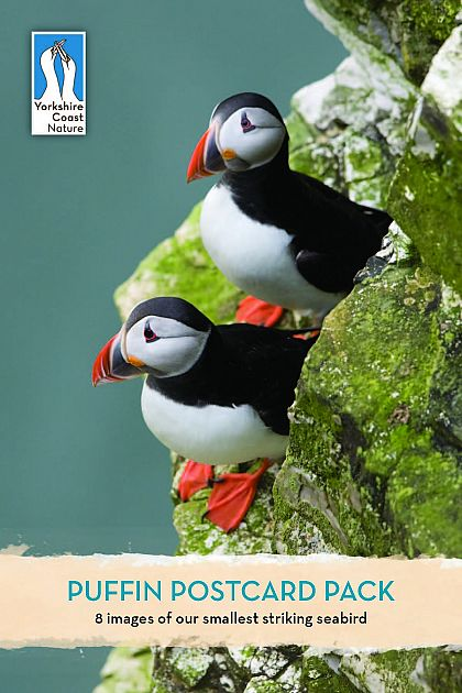 Puffin Postcard Pack