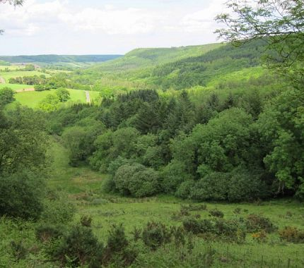 North Yorkshire Forests