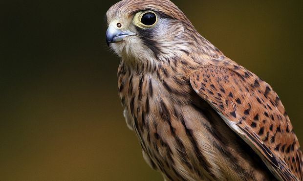 Birds of Prey Photography Workshops