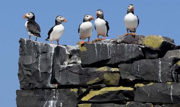 Farne Islands Wildlife Spectacular