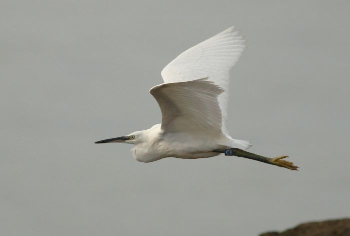 a Little Egret was a great find by one of our young visitors
